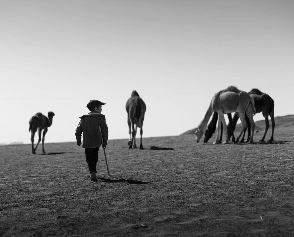 Camel Shapherd