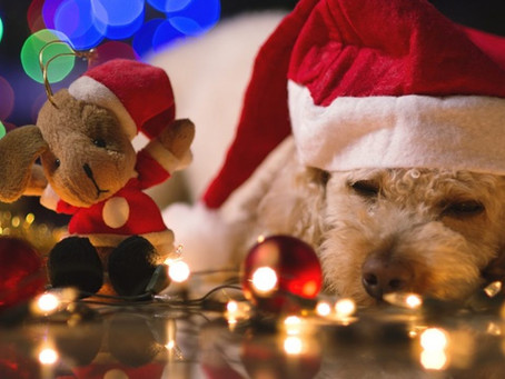 Keeping your Dogs safe at Christmas
