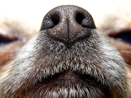 The Power of a Dogs Nose!