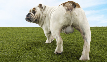 Neutering and behavioural changes in your dog
