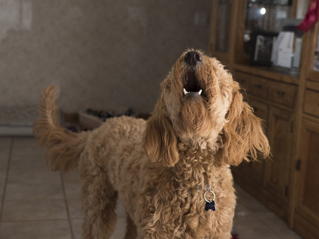 Separation Anxiety in Dogs and How to Deal with It