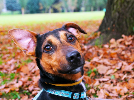 Autumn Care for your Dog