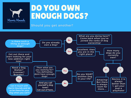 Do you Have enough Dogs?