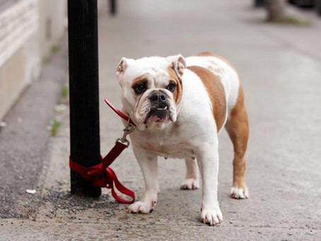 Protect your dog from Theft!