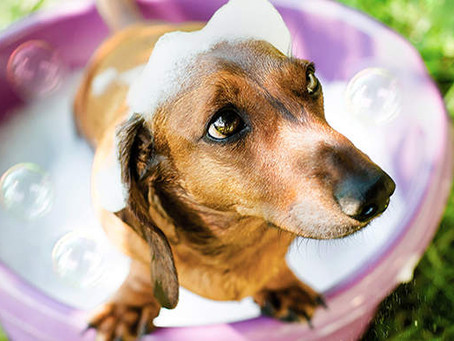 Five Summer Dog Grooming tips from Harris Hounds