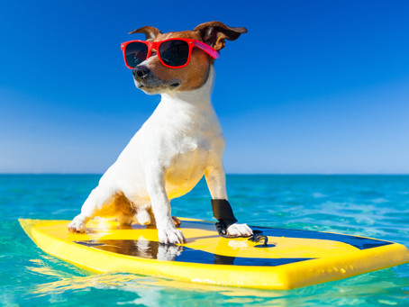 Five Reasons your Dog needs to be Careful in the Summer
