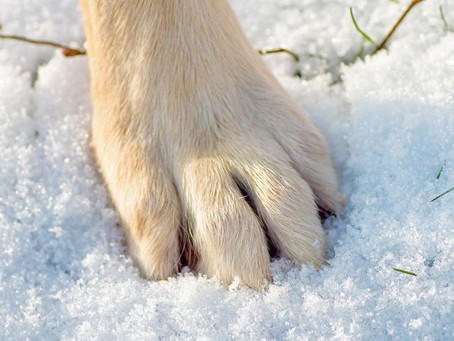 The dangers of road grit and anti-freeze to our Dogs