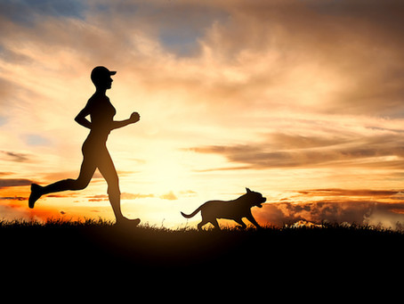 Running with your dog the Harris Hounds Way