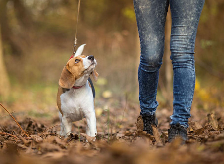 Guide to keeping dog walks safe and interesting during the Coronavirus outbreak