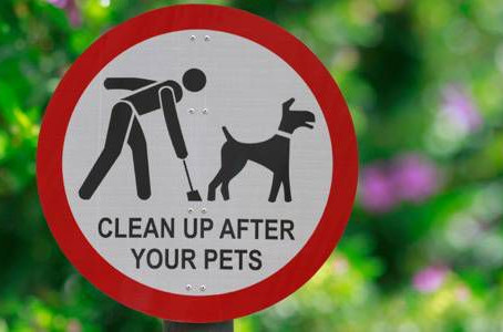 The Dog Poo Debate and Why it Matters