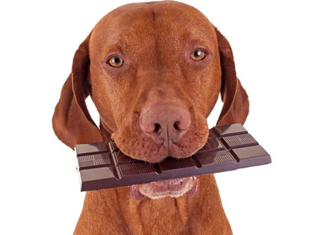 Chocolate and Dogs do not mix!