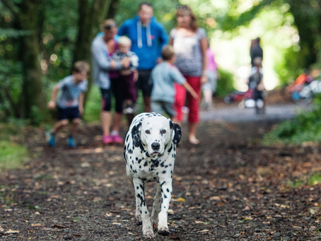 Harris Hounds Top 5 Plymouth Dog walking Spots.