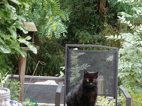 Maurice, Momo pour les intimes, petit chat superstitieux