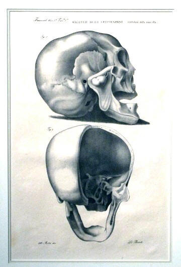 An Early 19th Century Anatomical Lithograph of a Skull