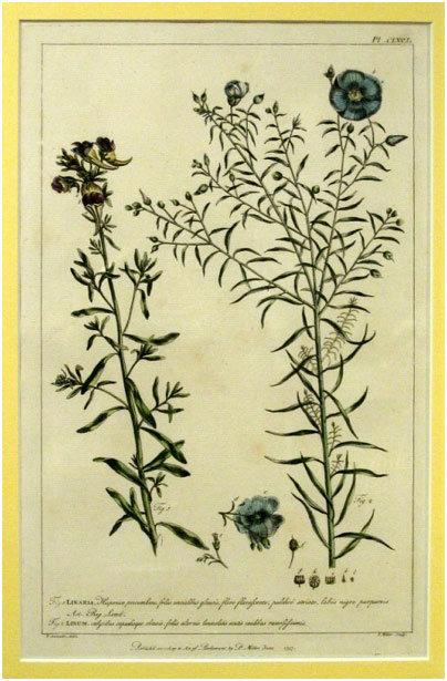 A Rare Set of Six George II Hand-Coloured Botanical Studies