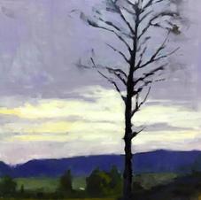 1620 lone tree.jpg