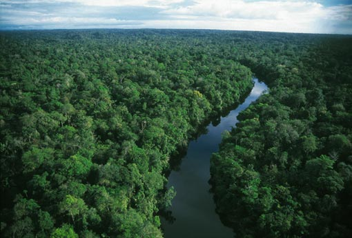 Amazon Rainforest - A Nature Nation