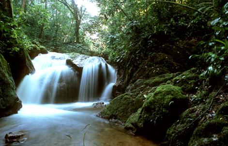 Amazon Rainforest - A Nature Nation