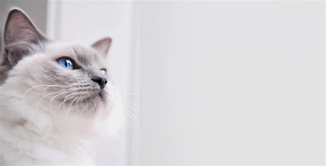 Preisliste Katzen und Kleintiere.jpg