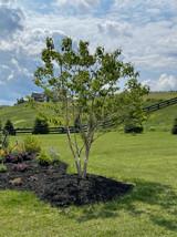 RiverRockLandscaping-Tree Planting.jpeg