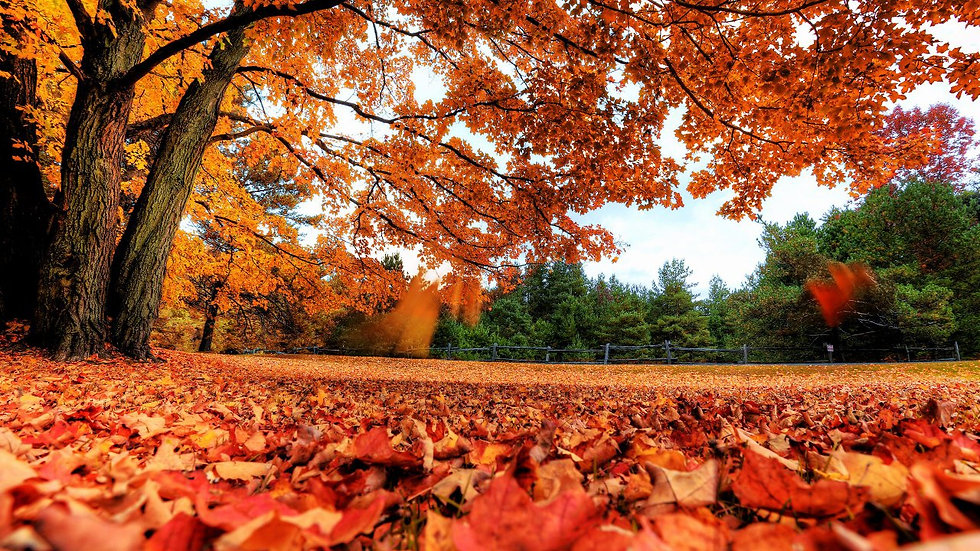 free-fall-foliage-images-hd-wallpapers-a