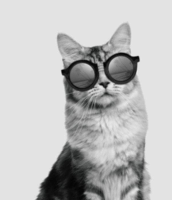 cat in glasses, eyewear, eyeglasses, glasses, conacts, optometry