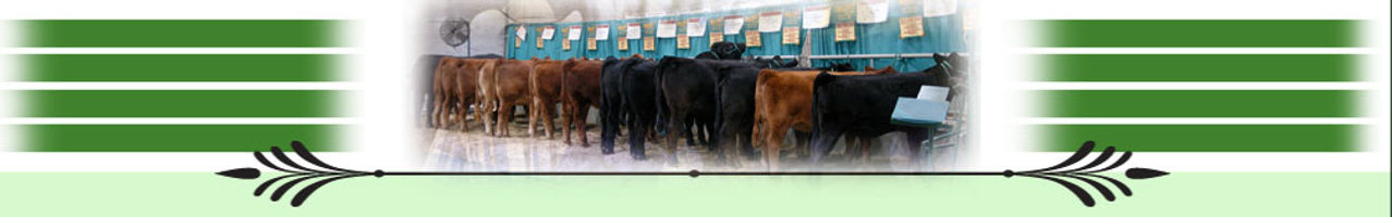 page_photo_cattle.jpg