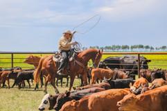 Days as a Custom Cowboy