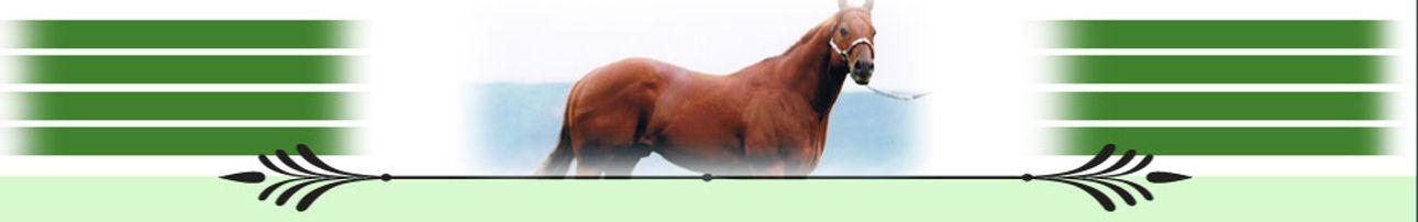 page_photo_horses2.jpg