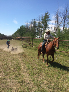 Home bred Ranch Horses