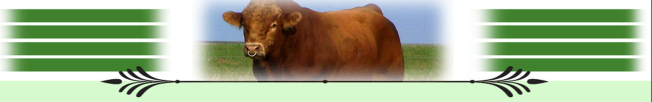 page_photo_cattle2.jpg