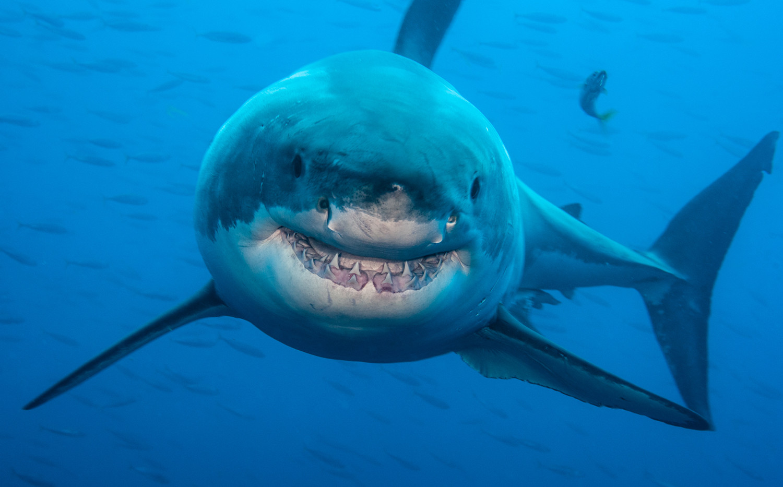 Smiling-Predator.jpg