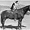 Thumbnail: Dogs: Saddle Up