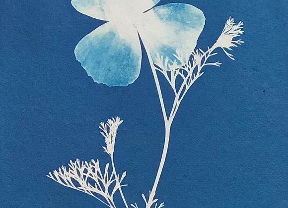 Greeting Cards - 'Botanical 1'