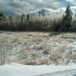 Ice storm below Tracks_edited.jpg