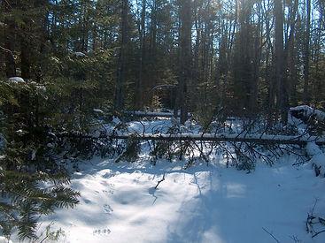 trail clearing 002.JPG