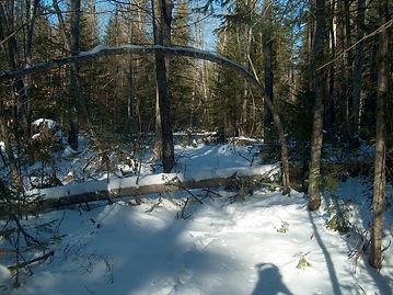trail clearing 003.JPG
