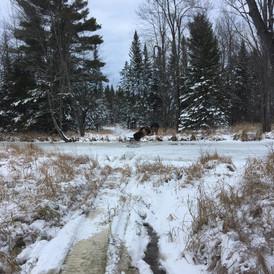 Hoyt Brook Breaking Trail.jpg