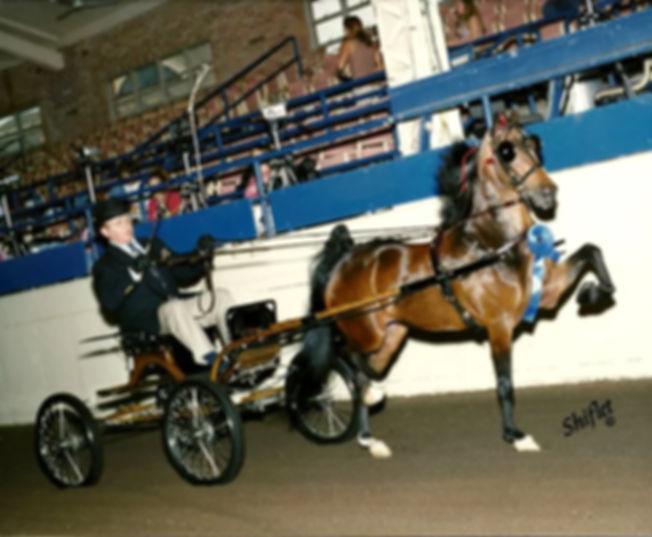 fine_harness_pony.jpg