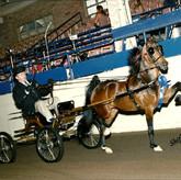 Hackney Pony