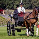 Dutch Harness Horse
