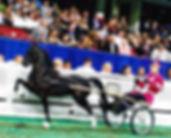 road_pony.jpg