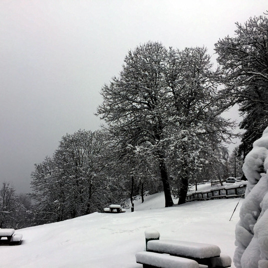 Trappa parco neve.JPG