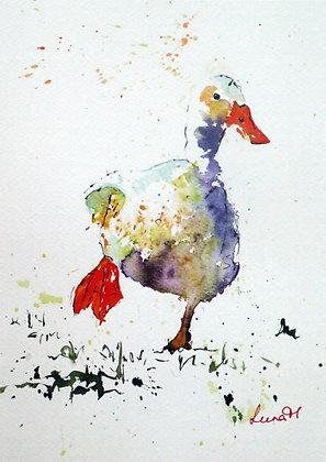 Dawdling Duck