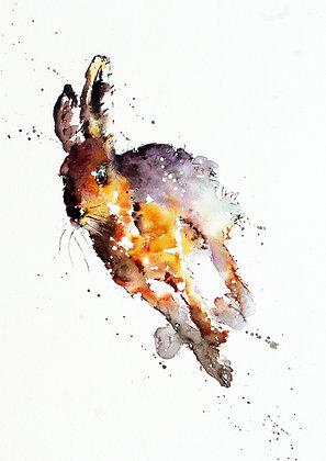 Hare Runner