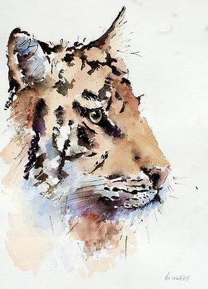 Tiger Cool