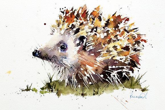 Hedgehog Helen