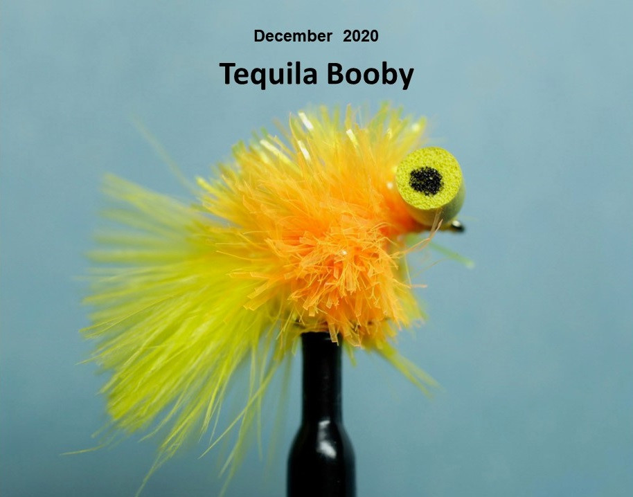 Tequila Booby