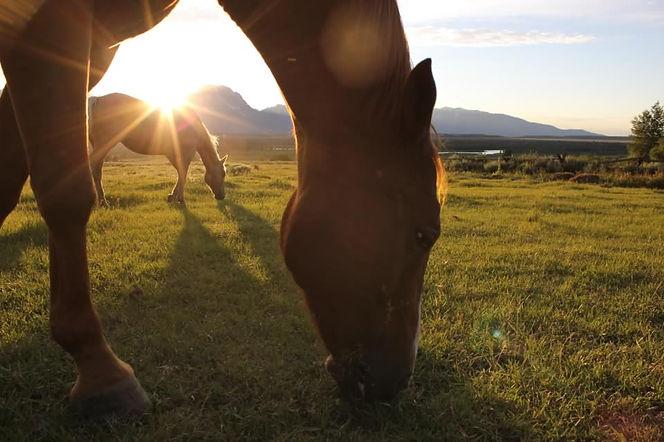 triangle-x-sunbeam-horses.jpg