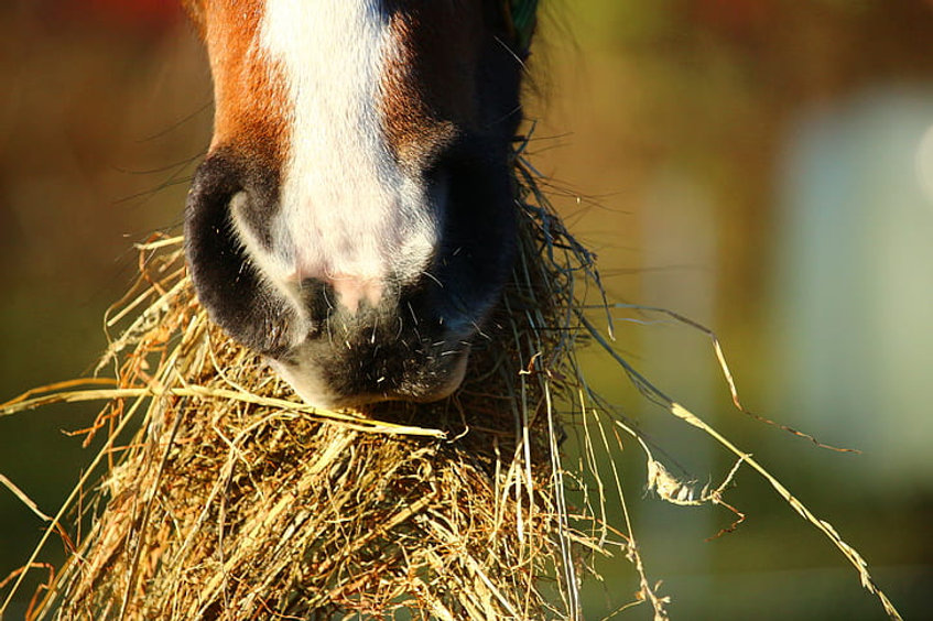 horse nutrition.jpg